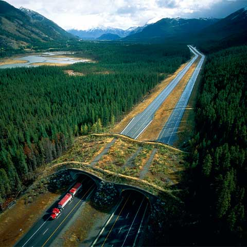 Daytime aerial photo of a highway near Banff, Canada with an overpass for wildlife, including bears. Dense forest surrounds the highway, which has a total of four lanes divided by a median. The top of the overpass is covered with plantings, which makes it blend in with the surrounding landscape. A truck is emerging from the underpass. Mountains and a body of water are in the background.